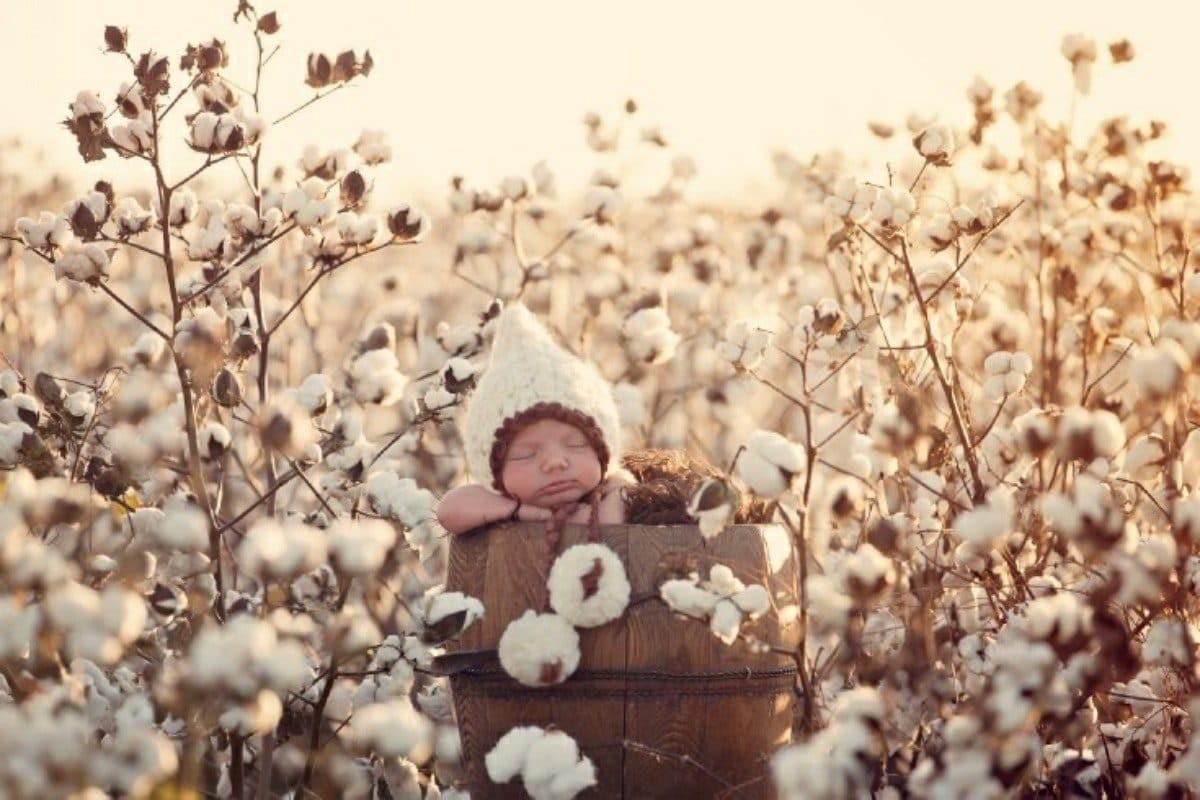 Baby in field of organic cotton in a kinder world